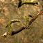 Moss growth