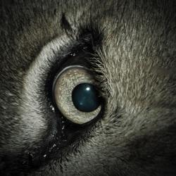 oog leeuwin