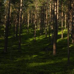 Schaduwen in bos