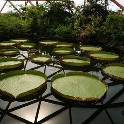 Flora in de Amazonica in Diergaarde Blijdorp