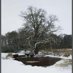 Dickinige in de Winter