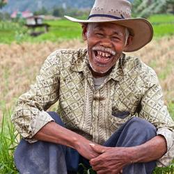 Rijstplukker op Sumatra