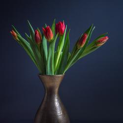Silleven van rode tulpen