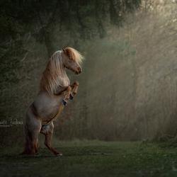 Magical pony