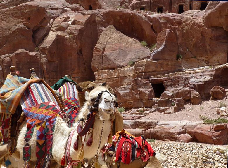 kamelen en rotsen 1505192322mw - op de opgraving Petra