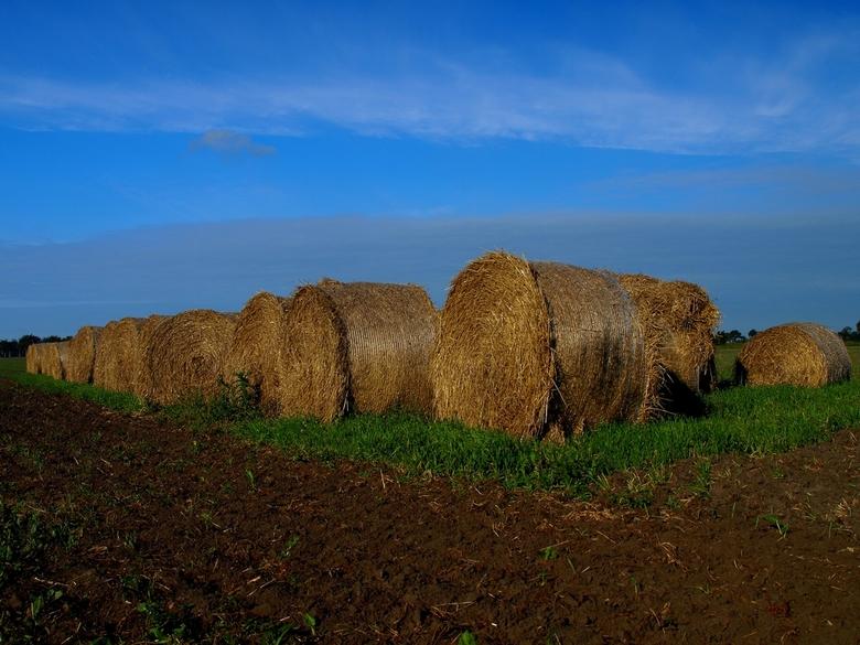 """Harvest.... - ThanX voor de reactie&#039;s op &quot;Schuim&quot;<br /> <br /> Have A Nice Day <img  src=""""/images/smileys/wilt.png""""/><br /> <br />"""