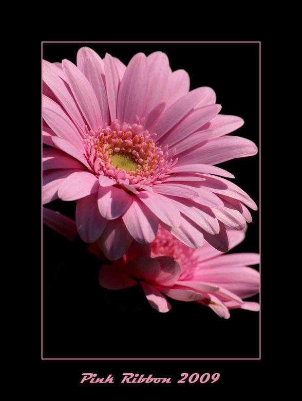 pink ribbon - Nog maar een bijdrage aan deze mooie aktie.<br /> Voor iedereen die het nodig heeft,heel veel sterkte.<br /> Liefs Trui