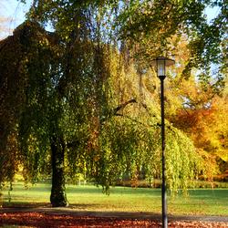 herfst tafereel lomo