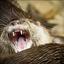 Bewerking:  Olympische Spelen voor dieren.......