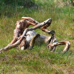 DSC_2715   Oud hout.