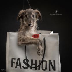 Fashion puppy love!