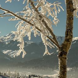 Een dik pak sneeuw zorgt voor een sprookjes achtige sfeer