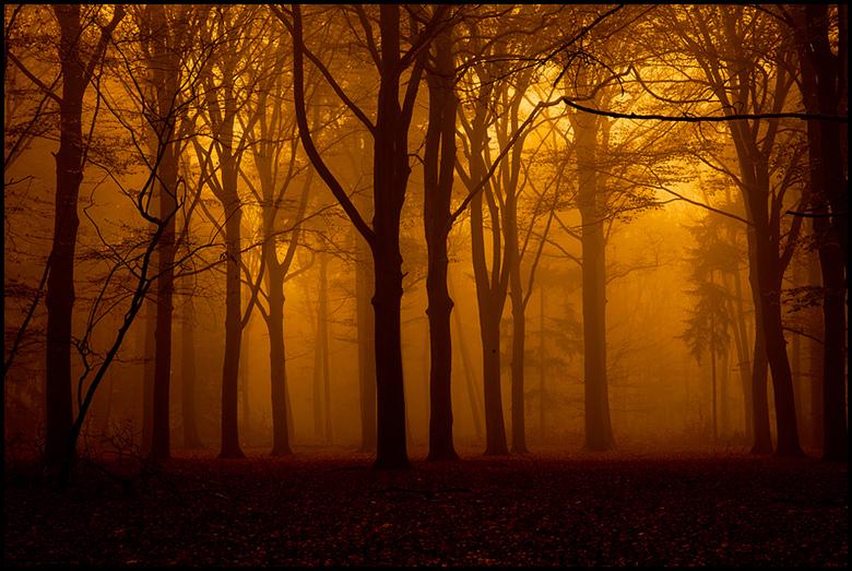 Herfst - .jpg
