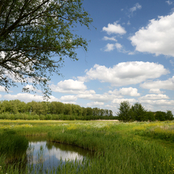 landschap Dussen
