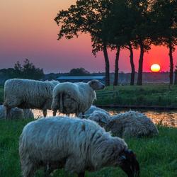 zonsondergang polder