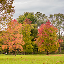 Beatrixpark in herfstkleur