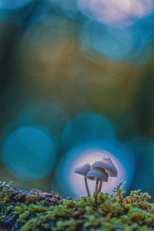 Diep in het bos komen sprookjes tot leven... - Bedankt voor de reacties op de vorige plaatsing