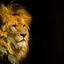 Leeuw Artis
