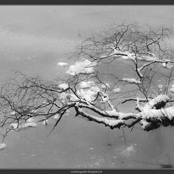 hangend boven bevroren vijver
