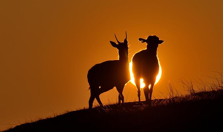 Liefde is.... - samen naar de zonsondergang kijken.<br /> Fijn weekend, Djurre