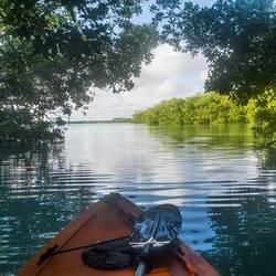 Kayakken door de mangroves in Bonaire