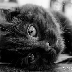 Kat, 8 maandjes