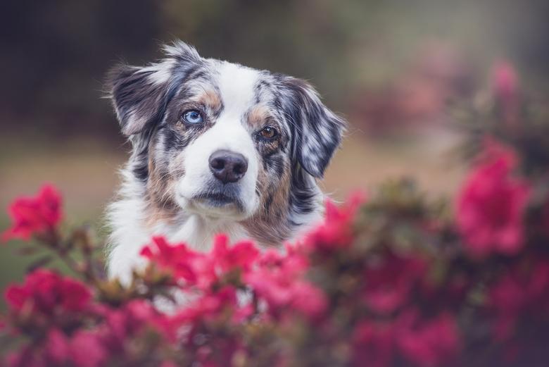 Flower dog  -