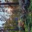 Het mooie bos