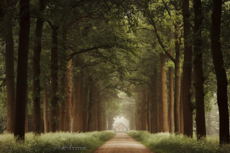 Lily's Lane.
