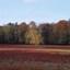 herfst Posbank