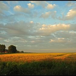 """A golden hour"" foto"