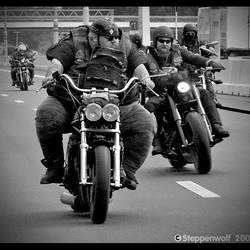 Born to be wild II