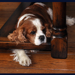 hondvriendlijke tafel 1004040312mw