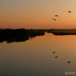 weerspiegeling in de polder