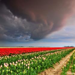 Nederlandse onweersbui