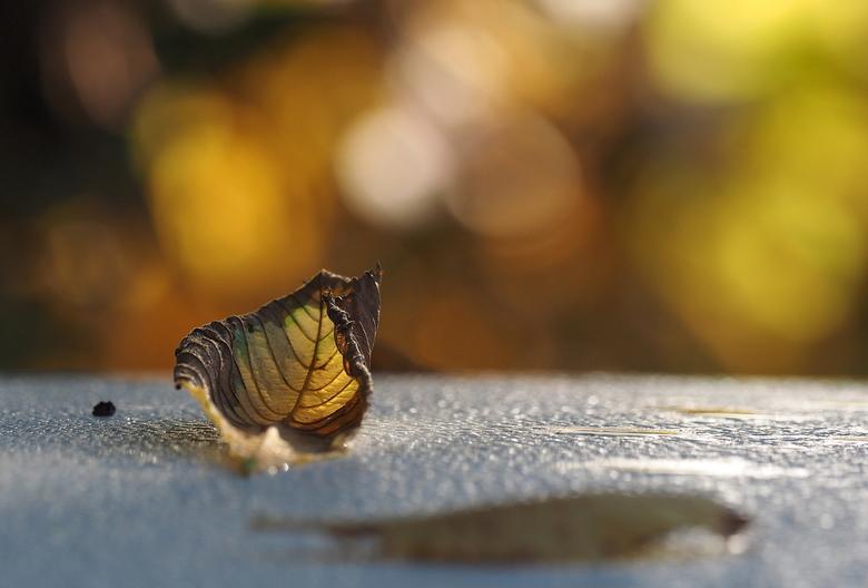 Herfst - Het Tegenlicht piept door de bladerheg...en zo maak je een verrassende dof en bokeh.