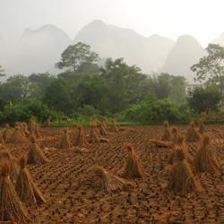 Rijstveld in het Karstgebergte, China