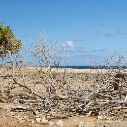 Washington Slagbaai Bonaire