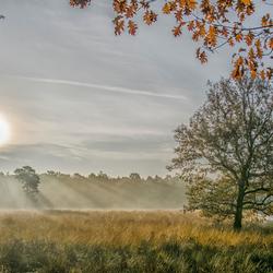gekoesterd in het vroege herfst zonnetje