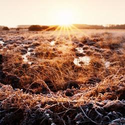 Zonsopgang in De Groote Peel