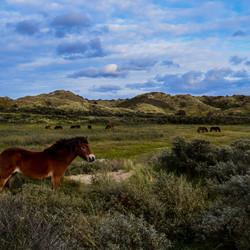 paarden vrijheid