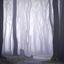 Het stille bos