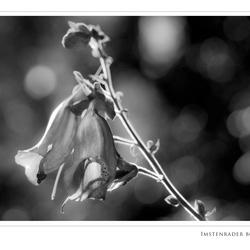 Een bloempje