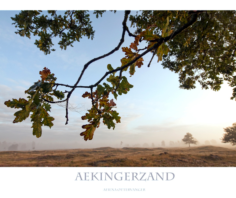Herfst Aekingerzand - De herfst was duidelijk begonnen in het Aekingerzand, compleet met de eerste warme kleuren, spinnewebben en mooie ochtendmist!<b
