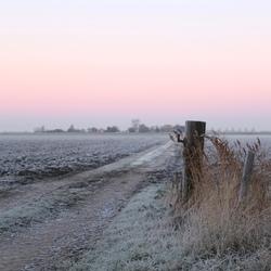Winterroze