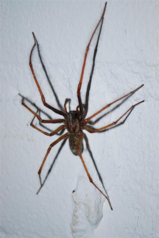 Acht Potig Monster - Volgens mijn vriendin doodeng en regelmatig bij ons in de schuur te vinden!