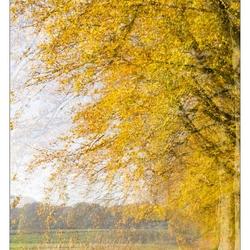 IMG_9109 het gele bos
