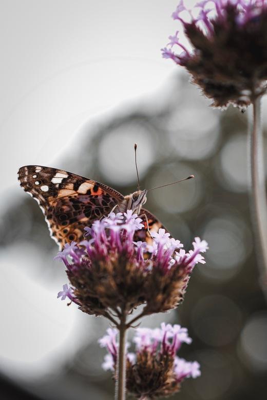 Vlindertje -