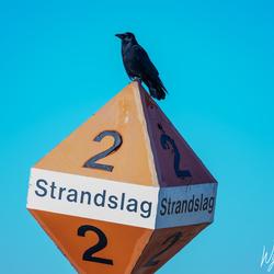I don't trust that strange bird