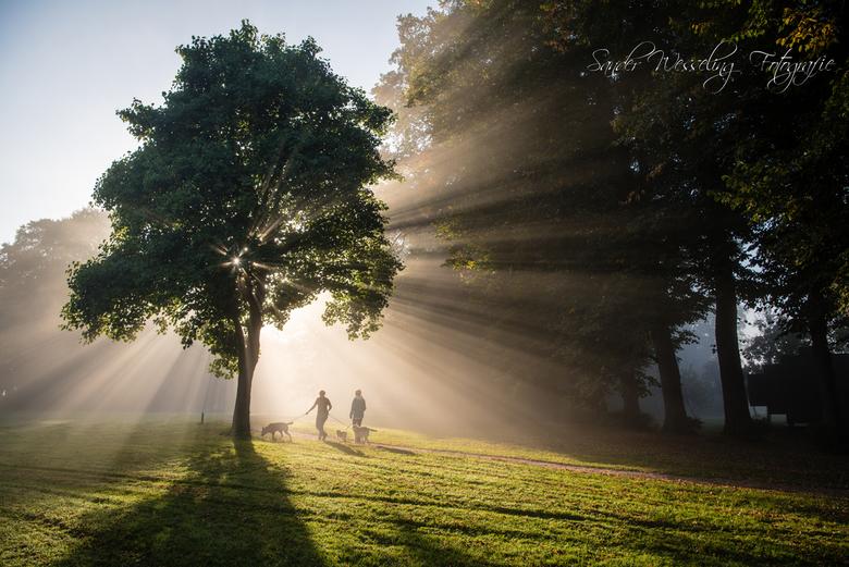 Autumn morning light -